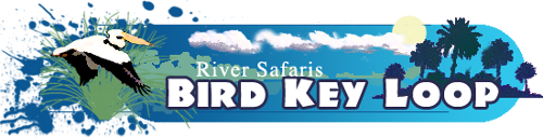 River Safaris Bird Key Tour