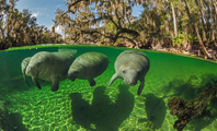 Manatee Tours photo